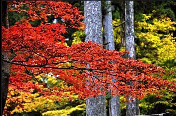 枫叶溪林风景图片